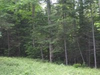 Wooded Lot During Summer