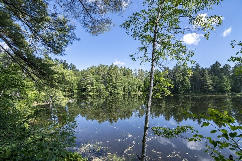 Pond Through The Trees