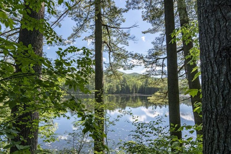 Pond Through Trees